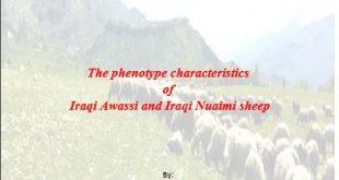 The phenotype characteristics  of  Iraqi Awassi and Iraqi Nuaimi sheep